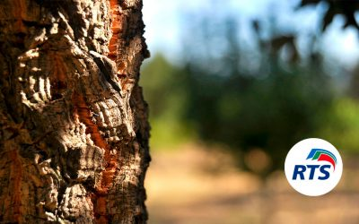 Pintura de corcho natural, el mejor aislante térmico