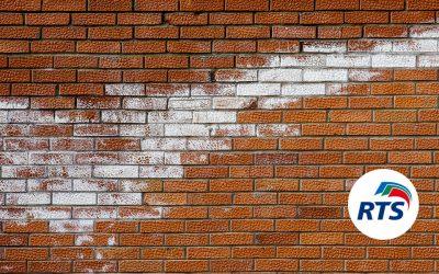 ¿Qué son las eflorescencias en paredes?¿Cómo evitarlas?